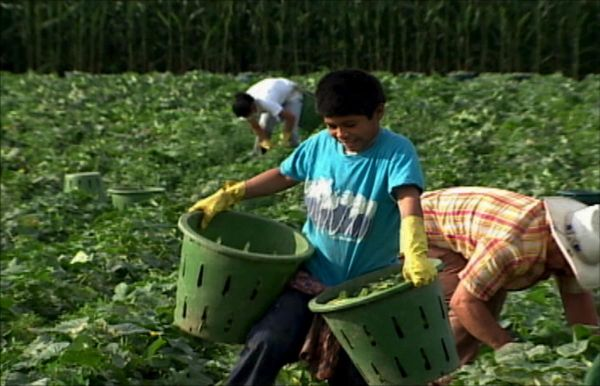 Migrant Workers America 39 S Harvest Of Shame