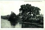 A Scene On Bayou Chene New Iberia, LA