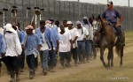 A prison guard on horseback watches inmates return from a farm work detail. A federal judge is ordering Texas prison officials to stop forcing inmates to drink water laced with dangerous levels of arsenic.