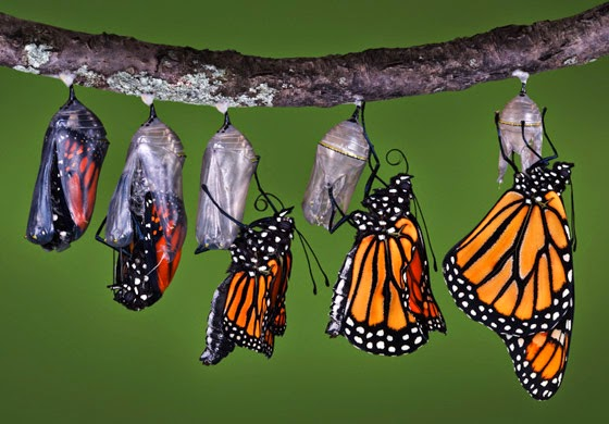 A chrysalis becoming a butterfly is an example of a phase transition
