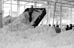 Workers unload farmed cotton in the Andhra Pradesh state of India. (Photo: Jankie)