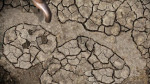 Water Drought image