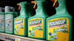 Roundup herbicide produced by Monsanto. (photo: Charles Platiau)