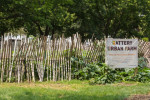 The Battery Urban Farm educational project in Manhattan. By HildaWeges PhotographyShutterstock