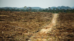 Destruction of rainforest in West Kalimantan, Borneo to pave way for palm oil plantation. Photo by David Gilbert/RAN
