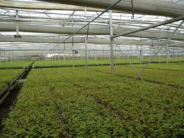 expanse-of-seedlings