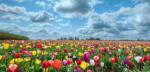 Flowers-Wallpaper-for-Desktop-815x300