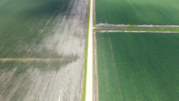 An aerial photo showing drift damage on a non-dicamba resistant soybean field next to a dicamba resistant soybean field. (Kade McBroom via EcoWatch)