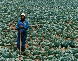Black Farmers Shut Out Of $10 Billion Medical Marijuana Business
