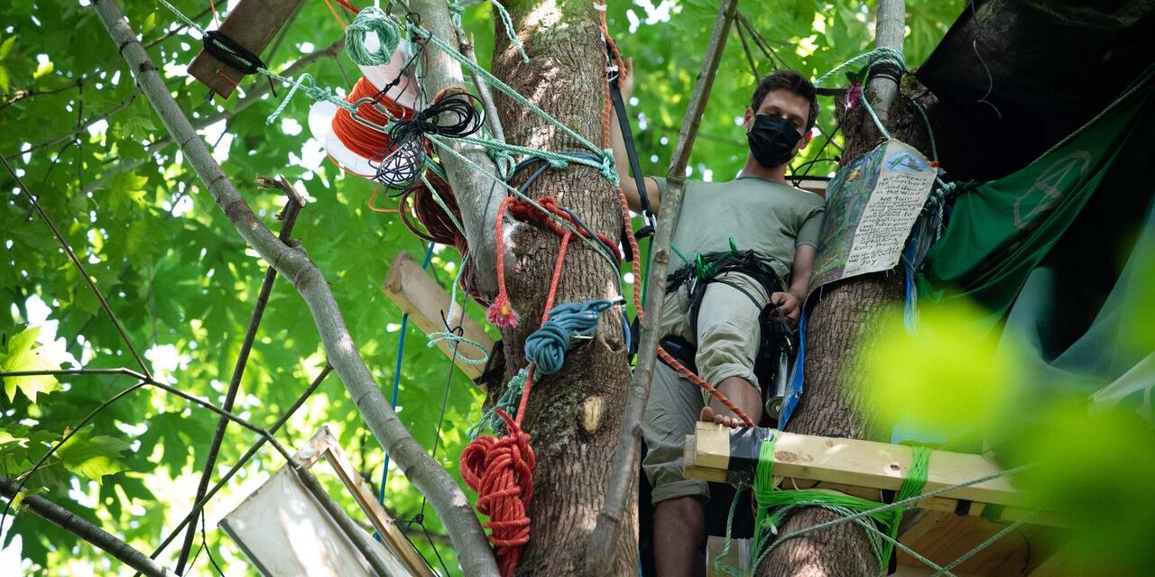 Treetop Activists Fear Removal After Trans Mountain Erects Fences, Cuts Trees